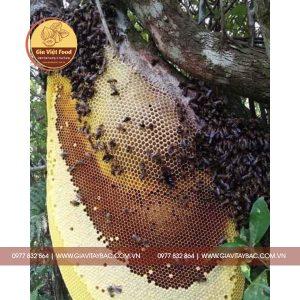 mat-ong-khoai 1